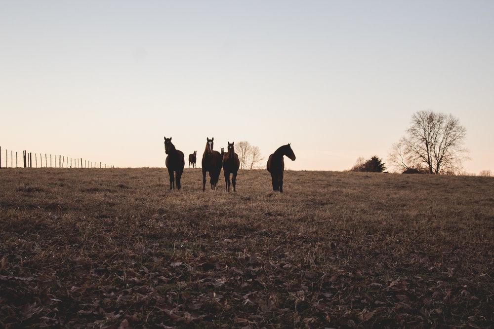 Midlands Horses-14.jpg