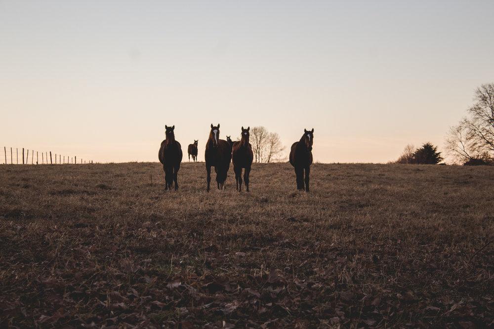 Midlands Horses-17.jpg