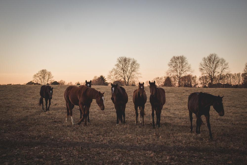 Midlands Horses-18.jpg