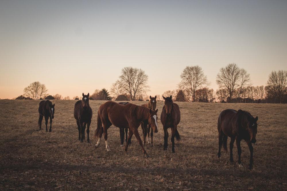 Midlands Horses-19.jpg