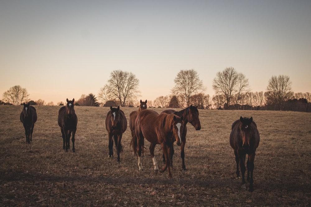 Midlands Horses-20.jpg