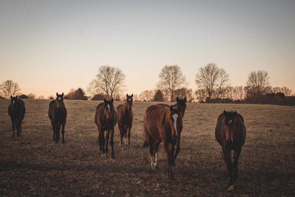 Midlands Horses-21.jpg