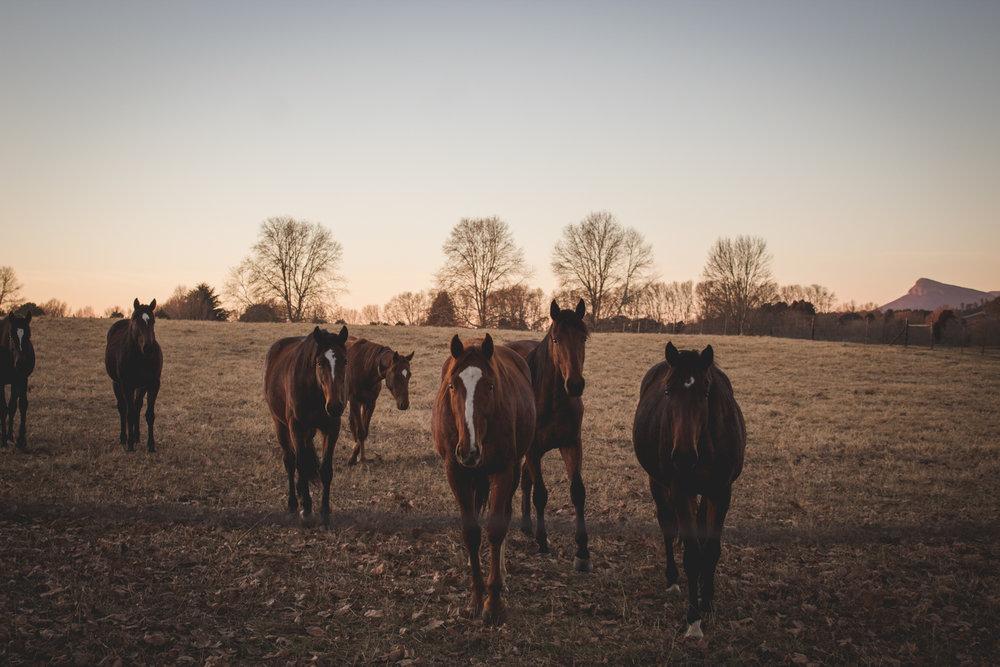 Midlands Horses-22.jpg