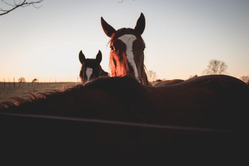 Midlands Horses-25.jpg