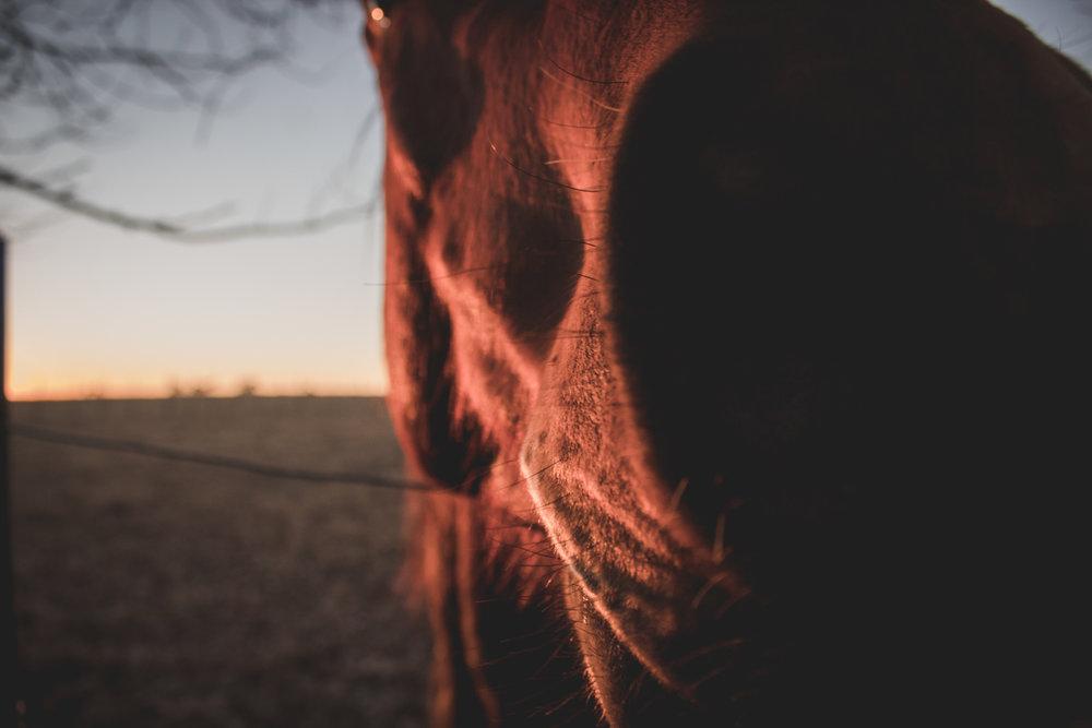 Midlands Horses-28.jpg