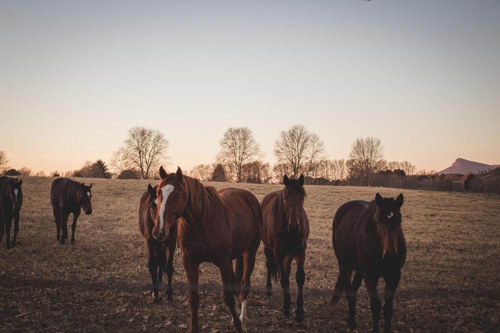 Midlands Horses-23.jpg