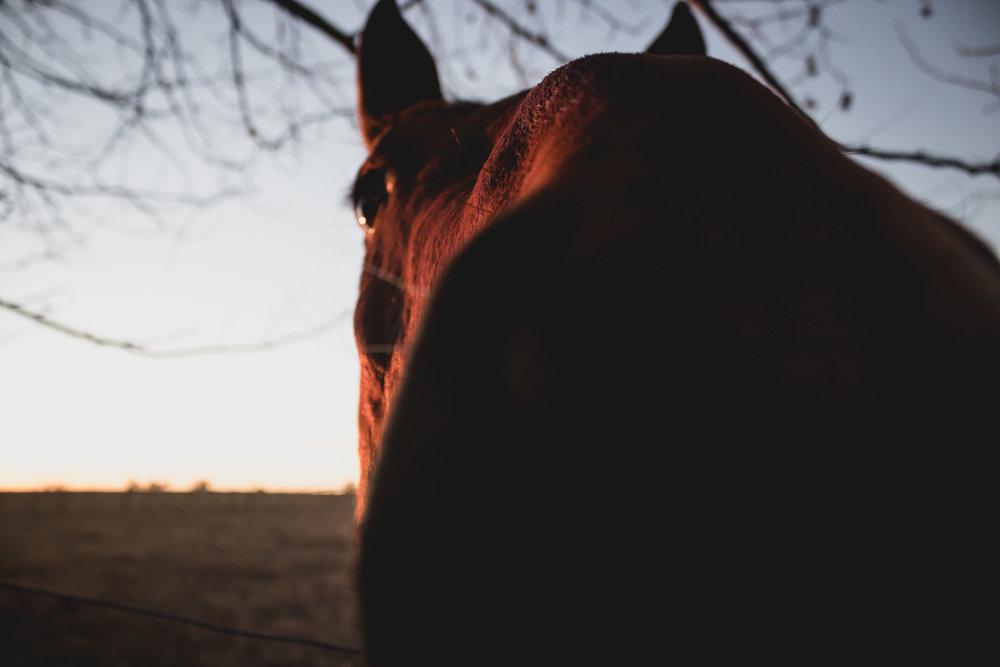 Midlands Horses-29.jpg