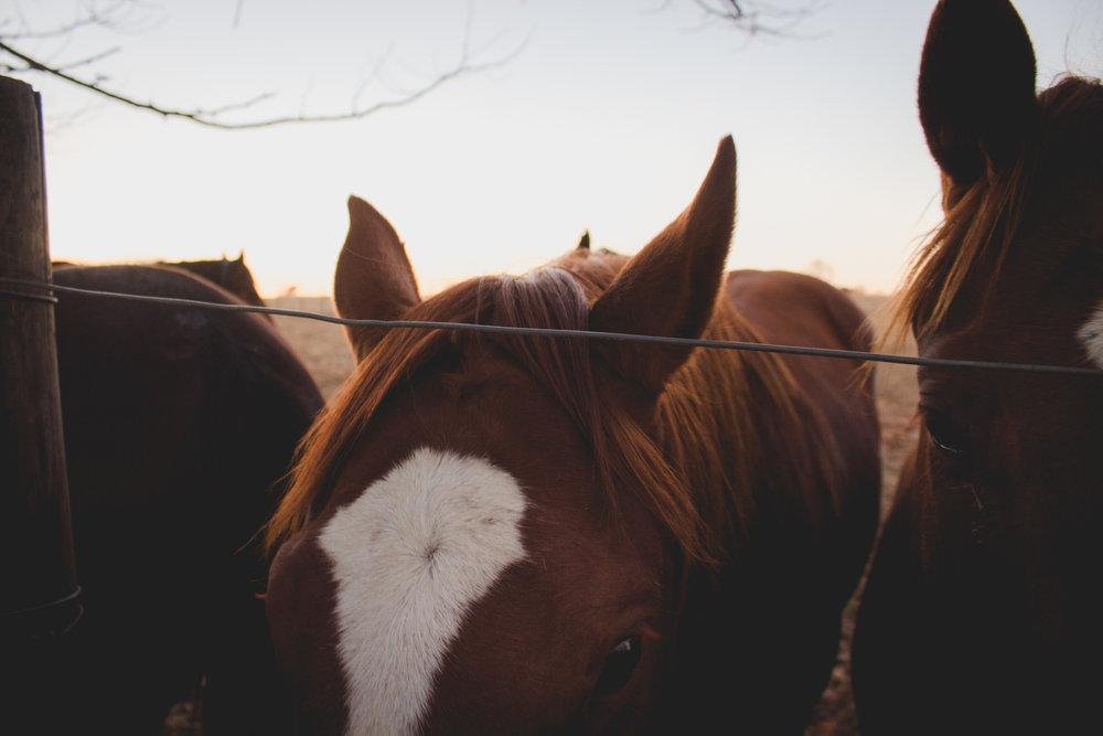 Midlands Horses-30.jpg