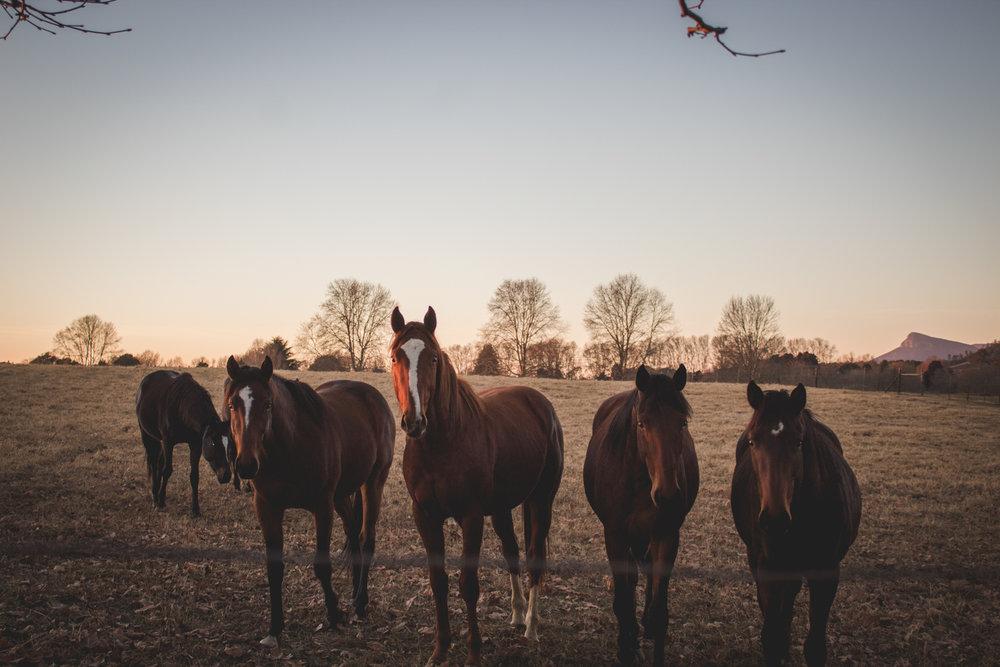 Midlands Horses-24.jpg