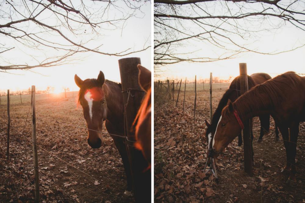 Midlands-Horses6.png