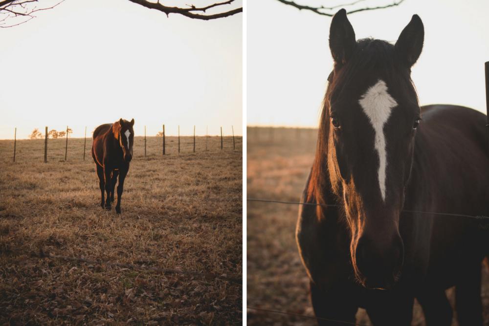 Midlands-Horses4.png