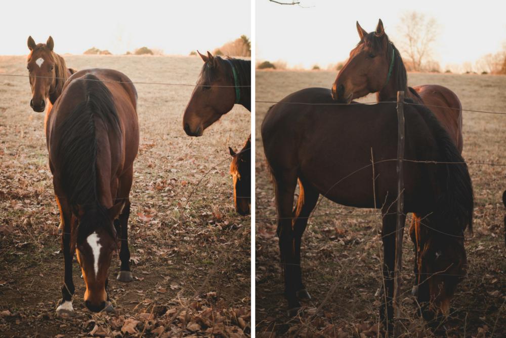 Midlands-Horses3.png