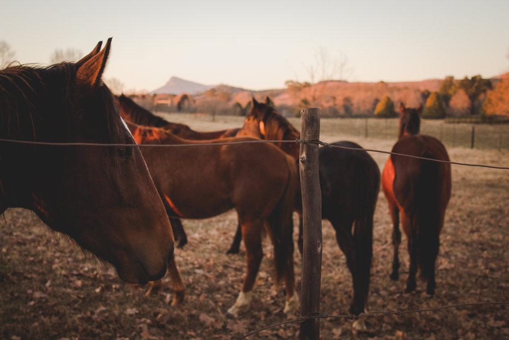 Midlands Horses-37.jpg