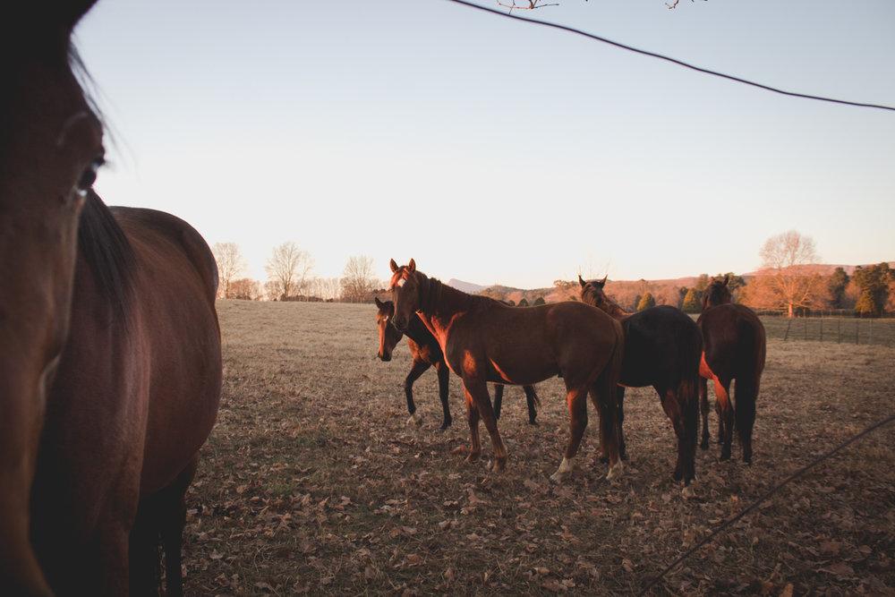 Midlands Horses-39.jpg