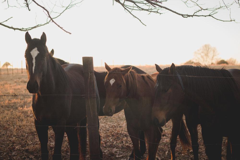 Midlands Horses-51.jpg