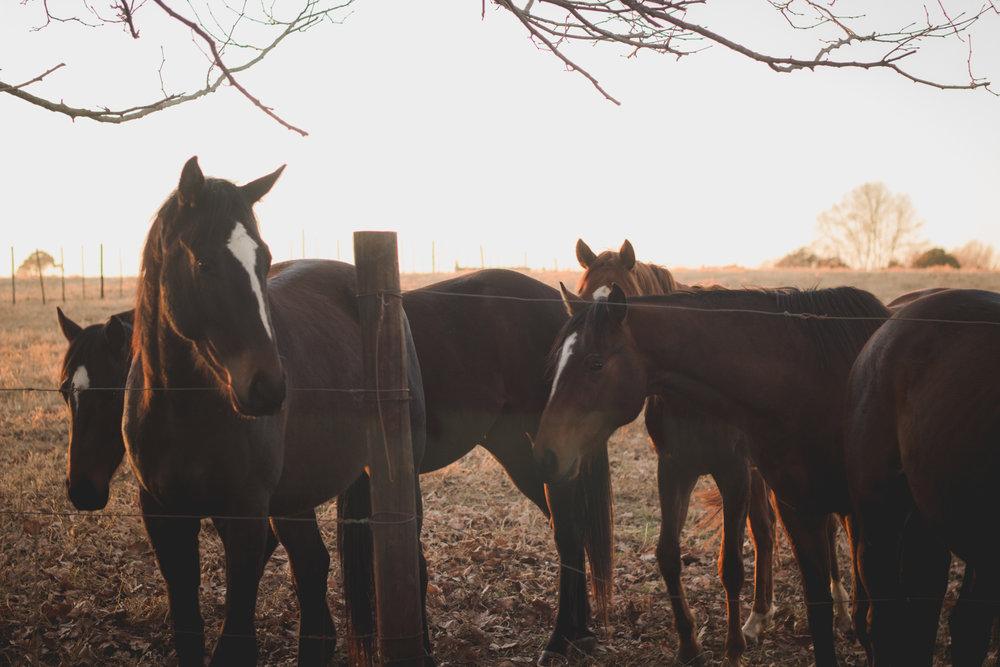 Midlands Horses-52.jpg
