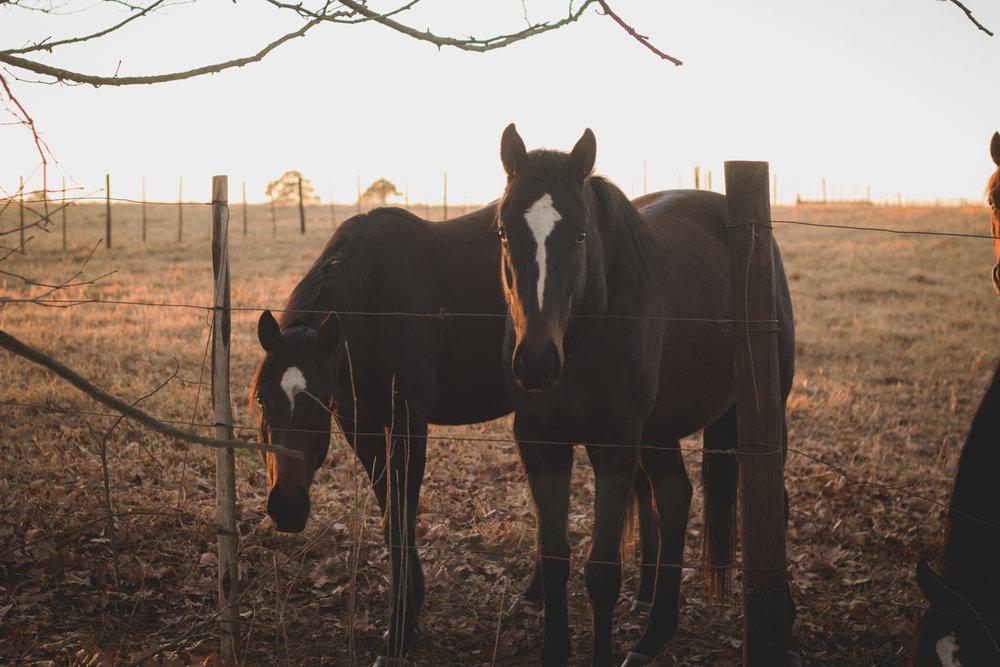 Midlands Horses-54.jpg
