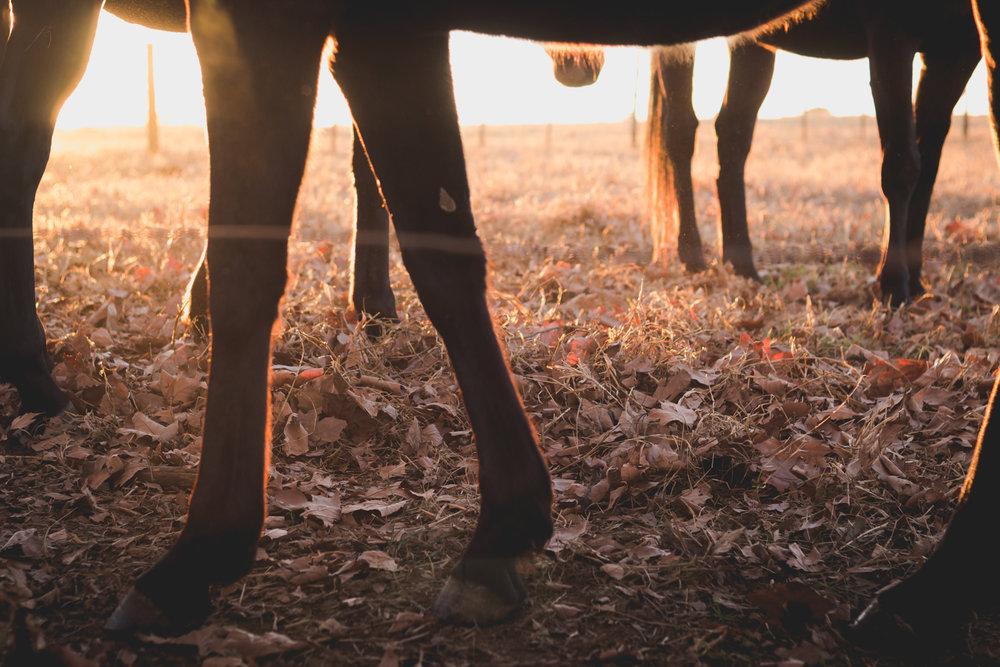 Midlands Horses-71.jpg