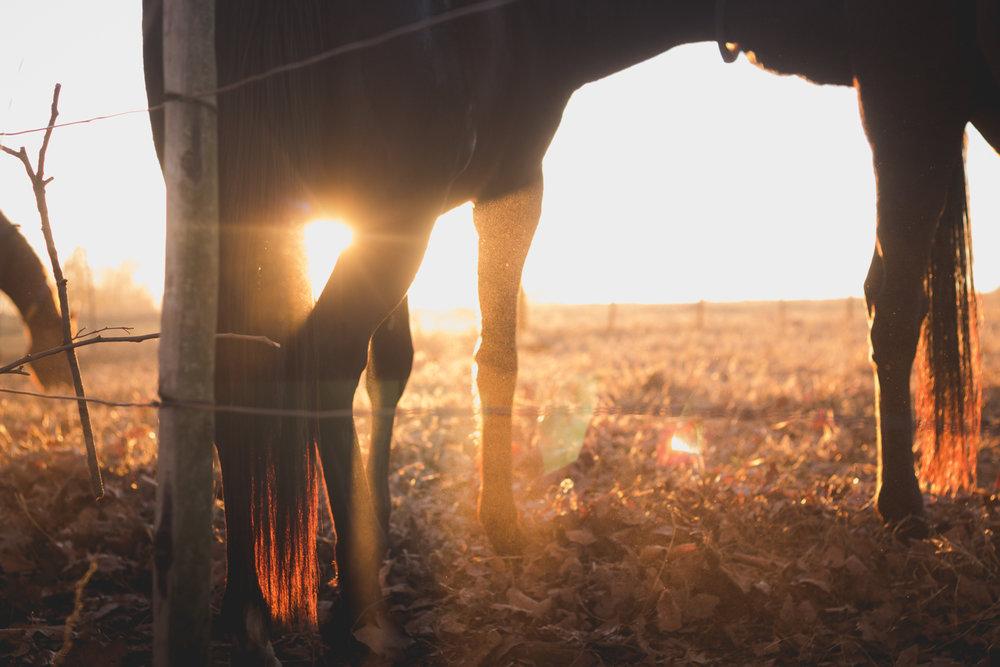 Midlands Horses-75.jpg