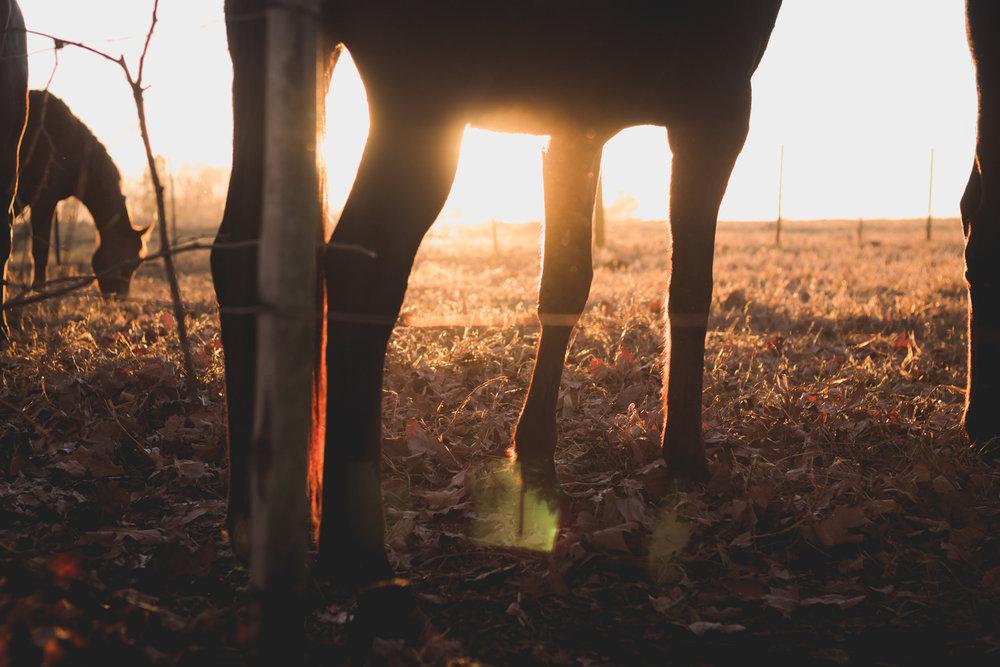 Midlands Horses-77.jpg