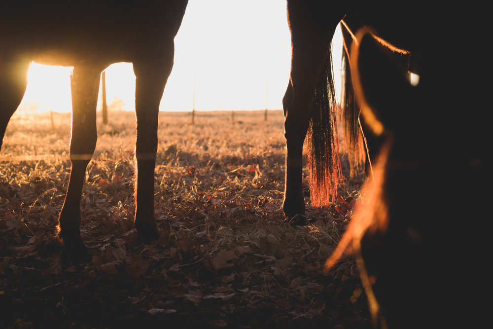 Midlands Horses-78.jpg