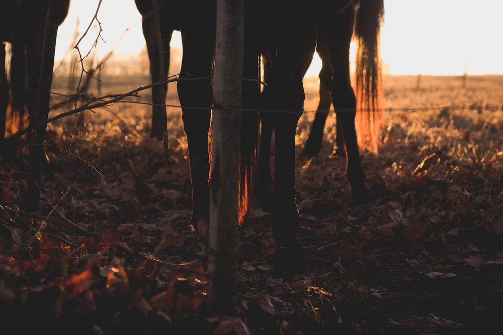 Midlands Horses-80.jpg
