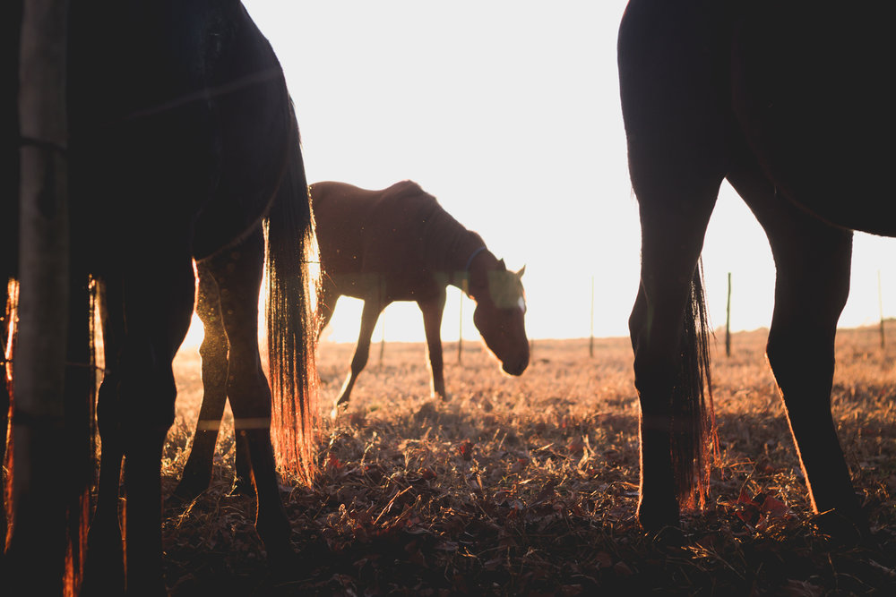 Midlands Horses-81.jpg
