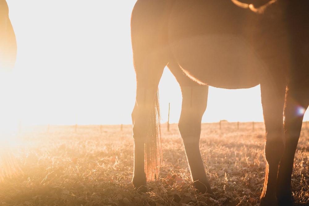 Midlands Horses-84.jpg