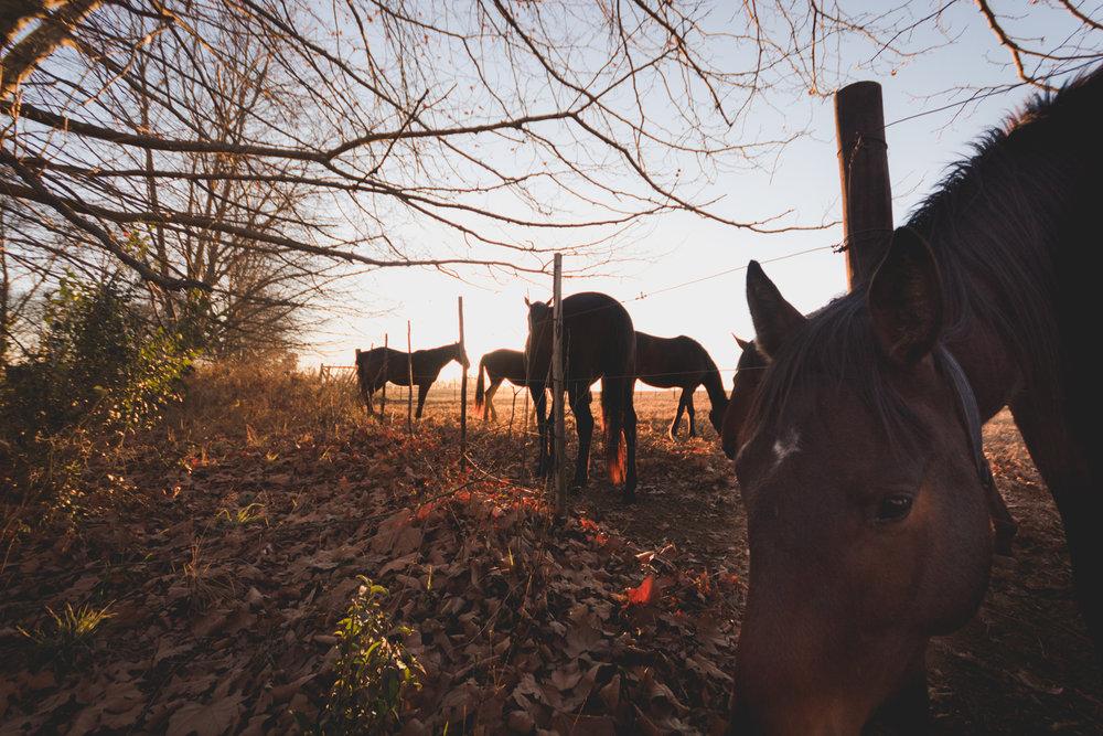 Midlands Horses-87.jpg