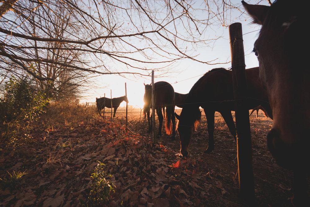 Midlands Horses-88.jpg