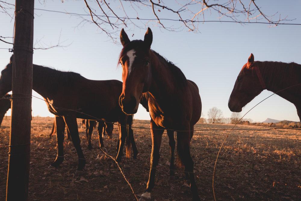 Midlands Horses-93.jpg