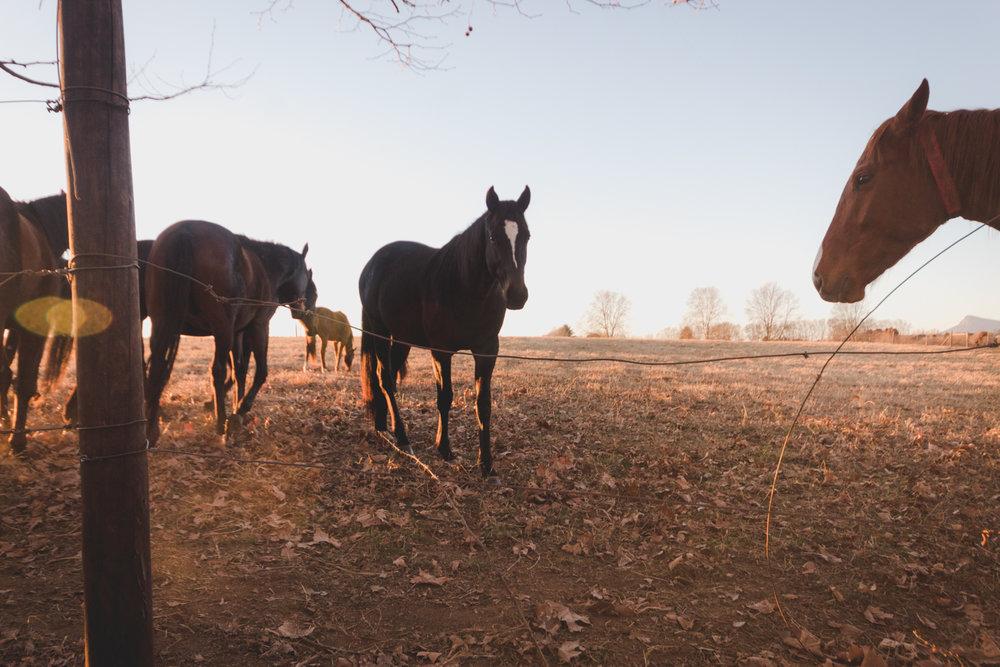 Midlands Horses-94.jpg