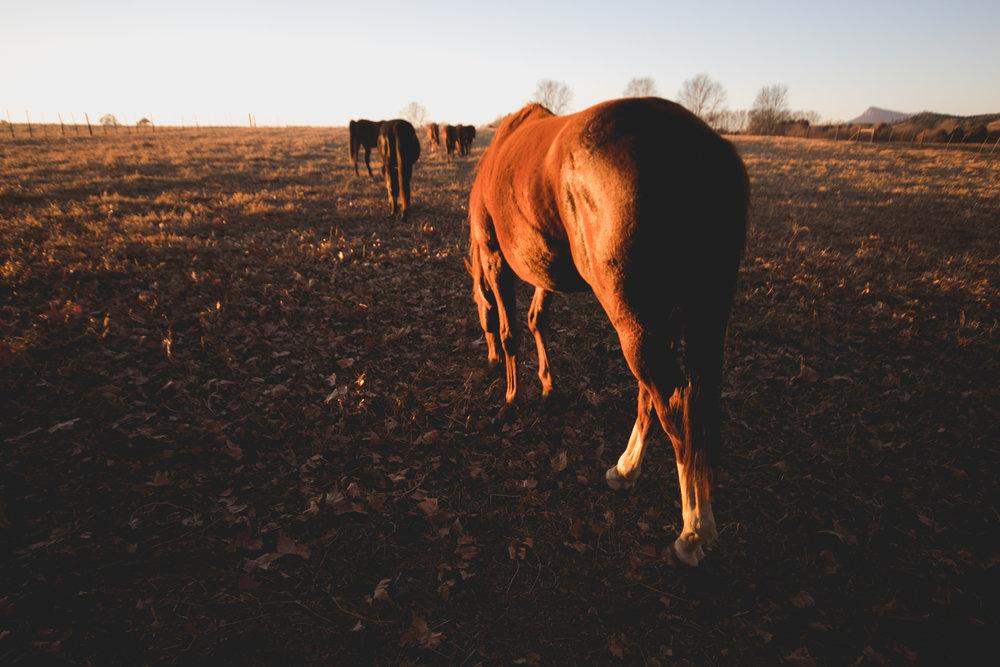 Midlands Horses-96.jpg