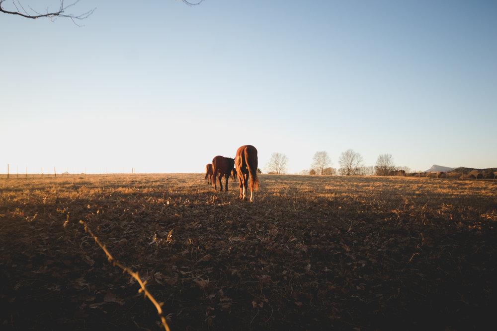 Midlands Horses-97.jpg