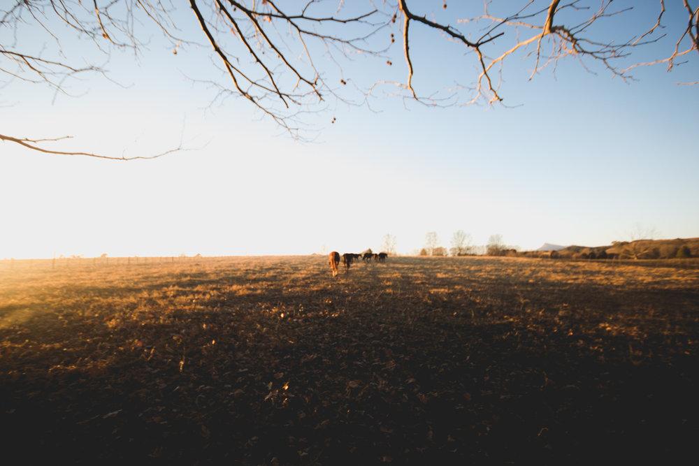 Midlands Horses-98.jpg