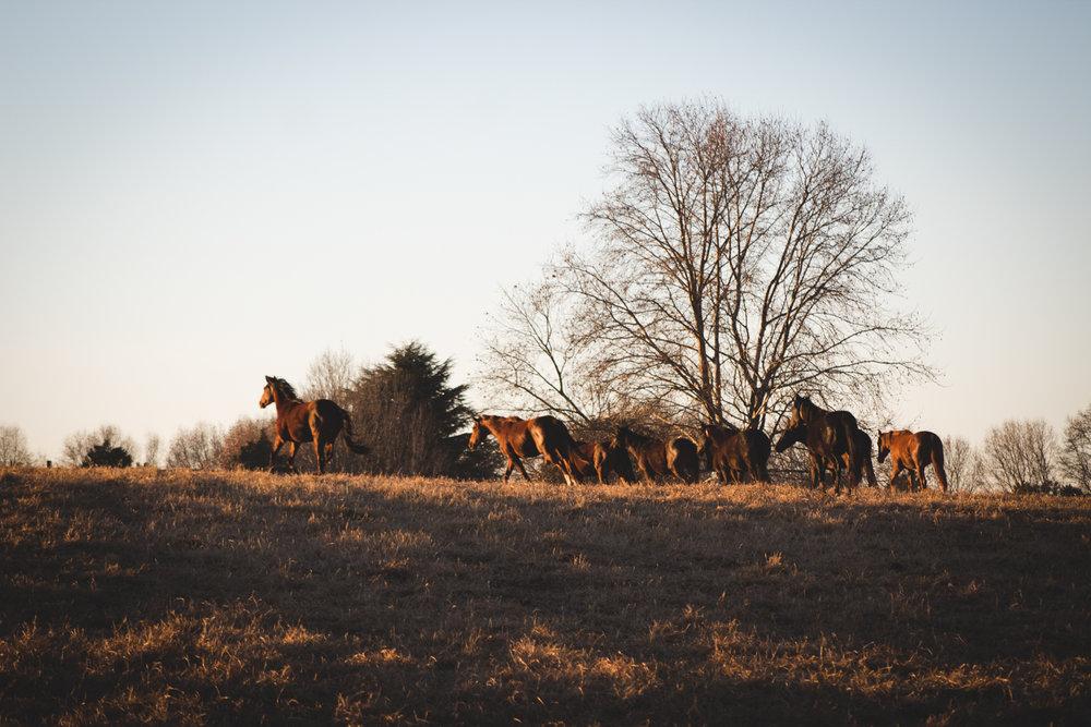 Midlands Horses-99.jpg