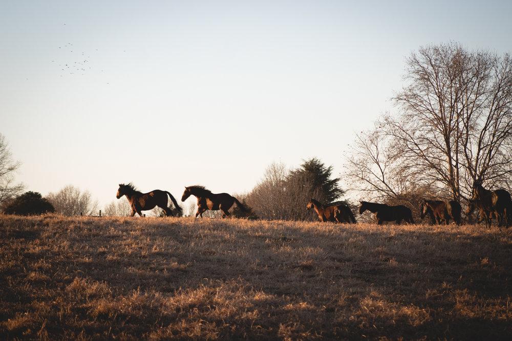 Midlands Horses-100.jpg