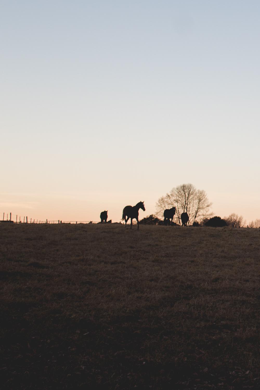 Midlands Horses-10.jpg