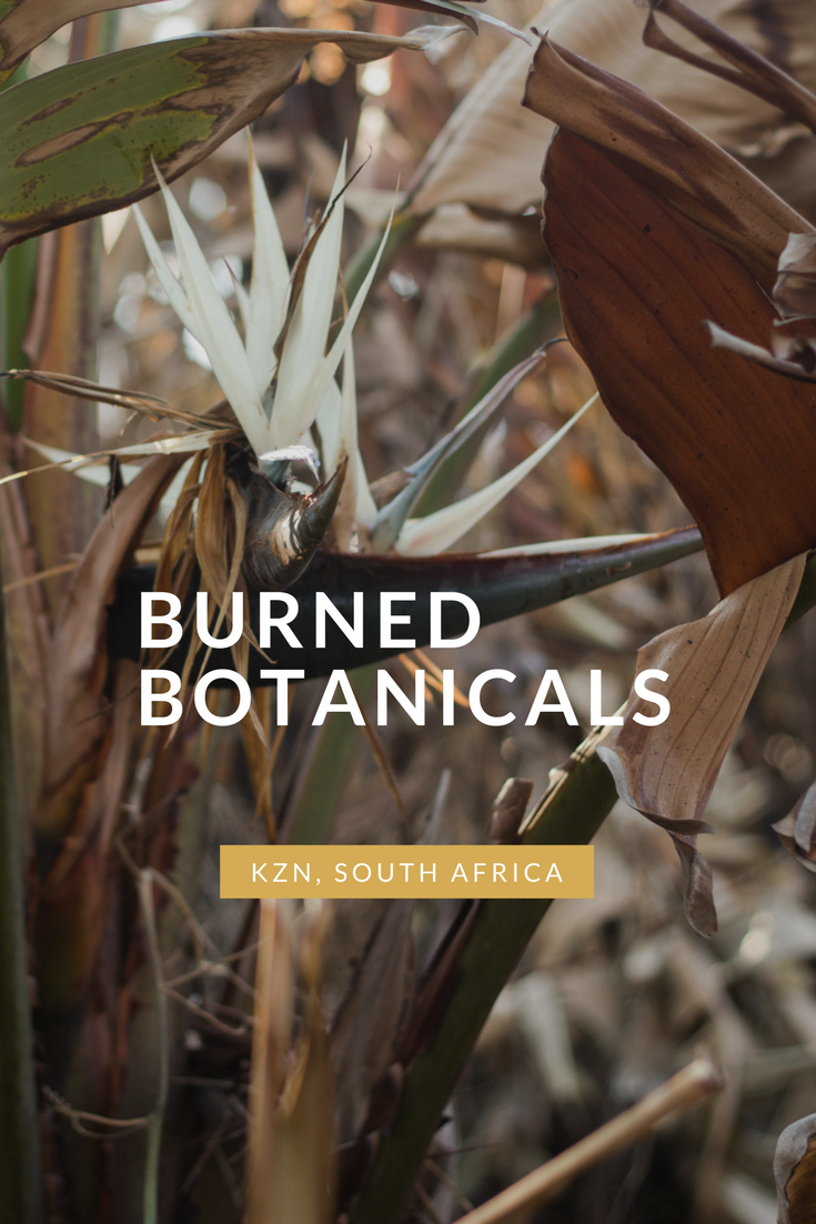 Burned-botanicals-by-Claire-Brear