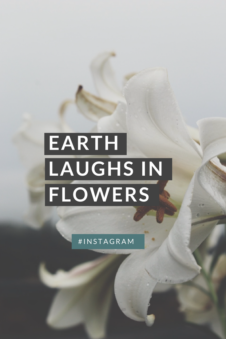earth-laughs-in-flowers
