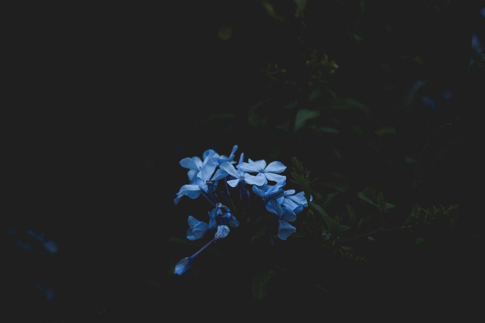 Moody Botanicals23.jpg