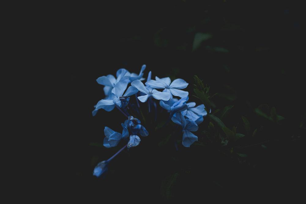 Moody Botanicals22.jpg