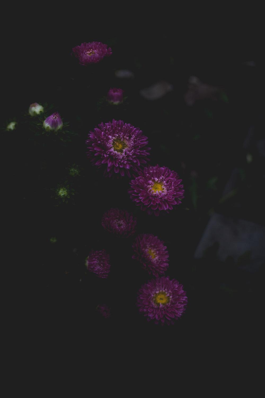 Moody Botanicals21.jpg