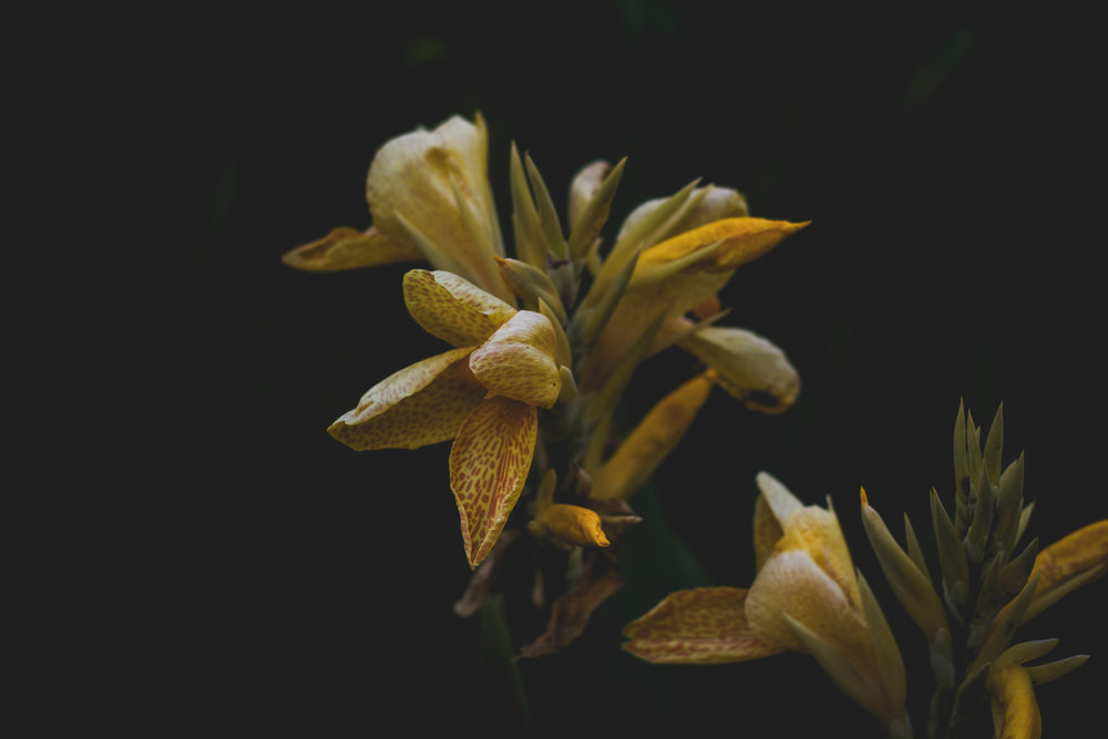 Moody Botanicals20.jpg
