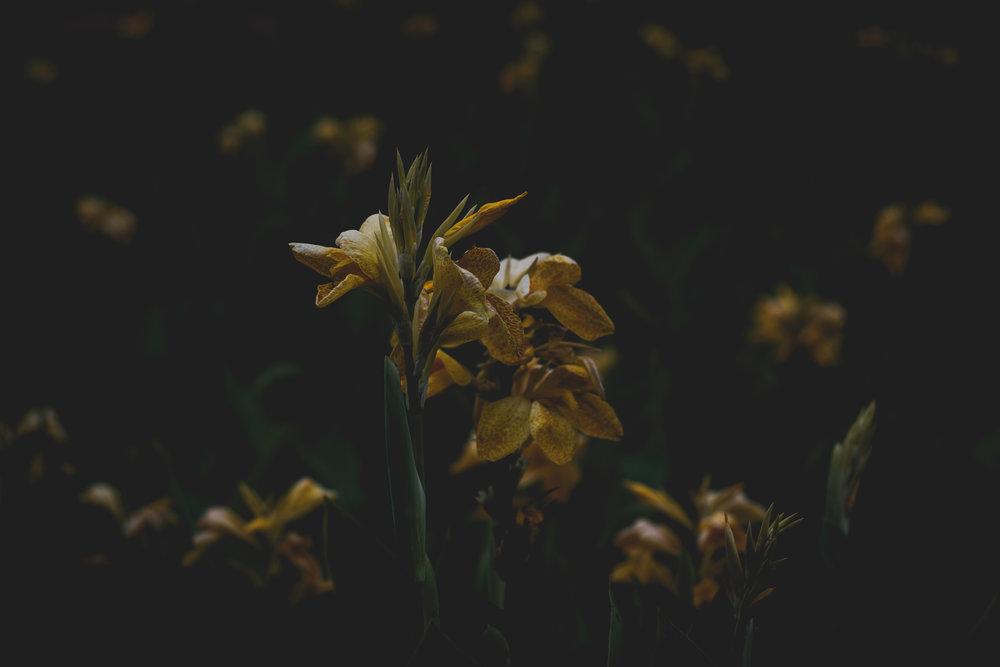 Moody Botanicals19.jpg