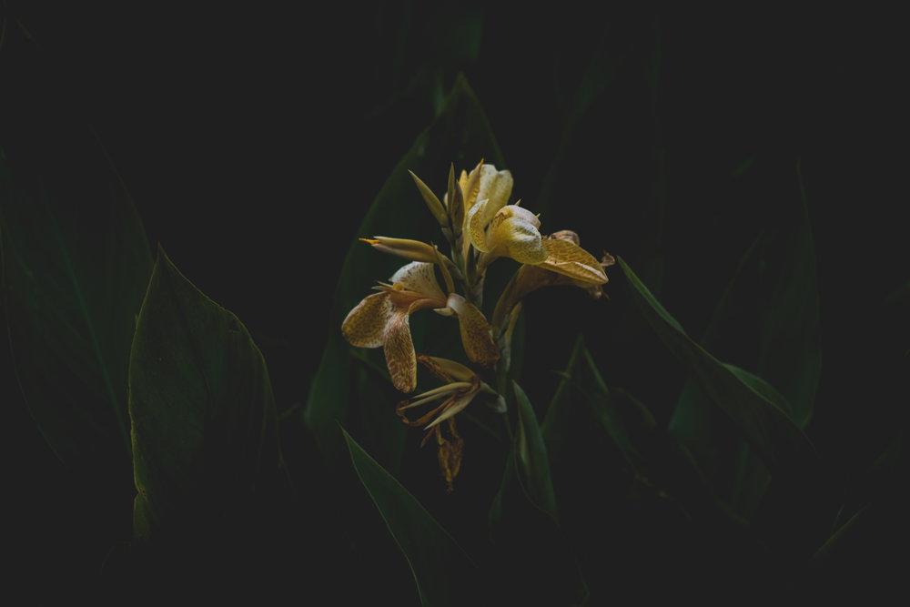 Moody Botanicals16.jpg
