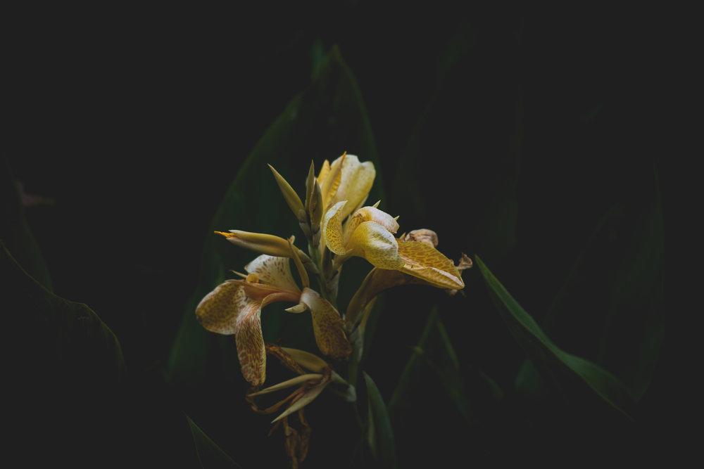 Moody Botanicals15.jpg