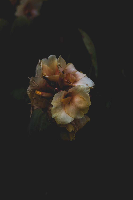 Moody Botanicals12.jpg