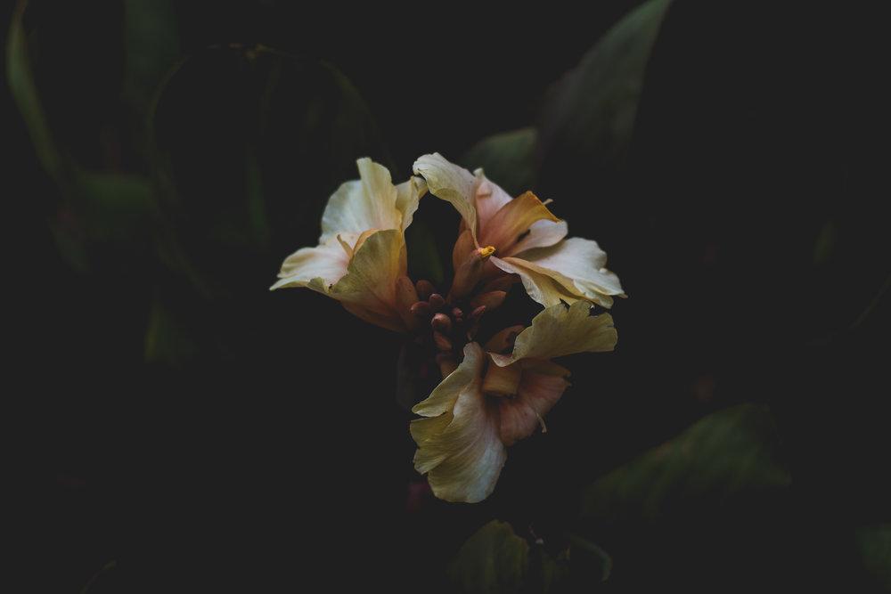 Moody Botanicals10.jpg
