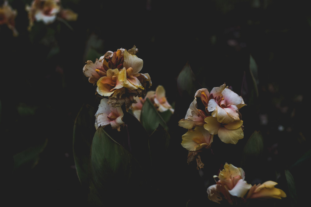Moody Botanicals11.jpg